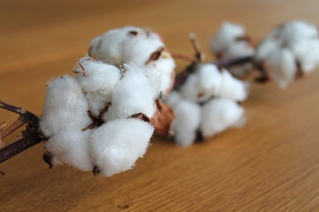 cotton-branch-1271038_640